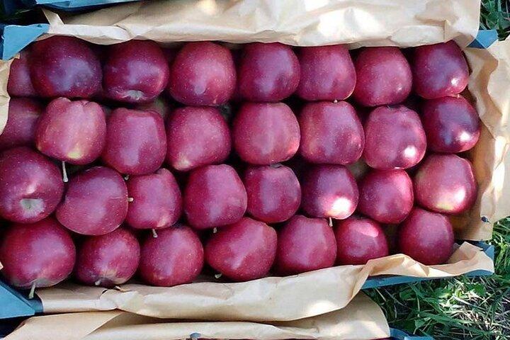 ممنوعیتی برای صادرات سیب ایران به پاکستان وجود ندارد