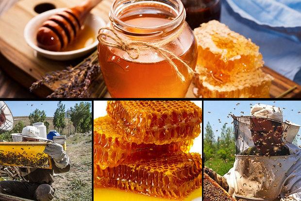 لزوم شناسنامهدار کردن فرآوردههای زنبورعسل در همدان