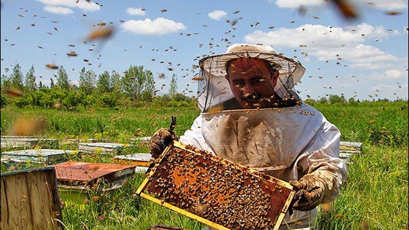 سالانه یک هزار تن عسل در شهرستان مشهد تولید می شود