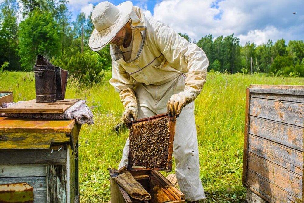 همدان صاحب امتیاز تنها مرکز آموزش تکنیک تلقیح مصنوعی زنبور عسل در خاورمیانه