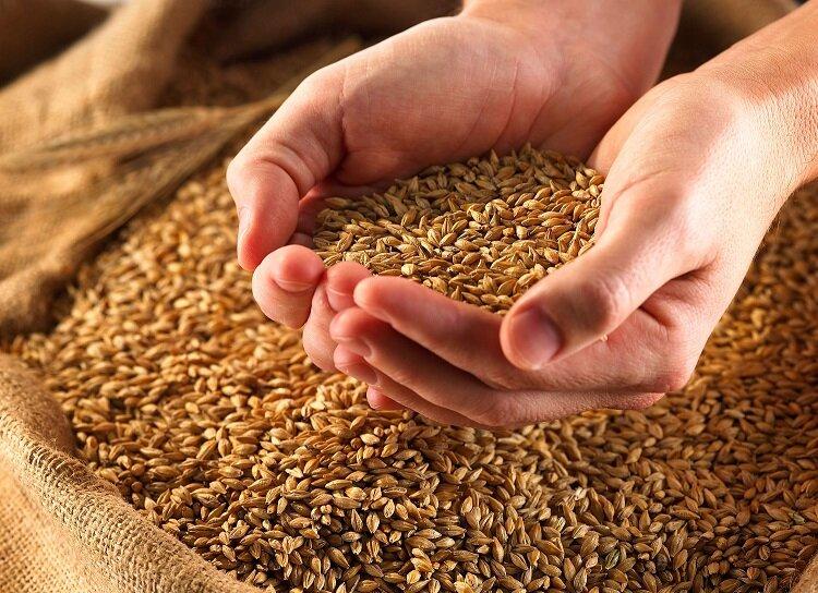 ۴۲ هزار تن گندم از روسیه به مازندران حمل شد