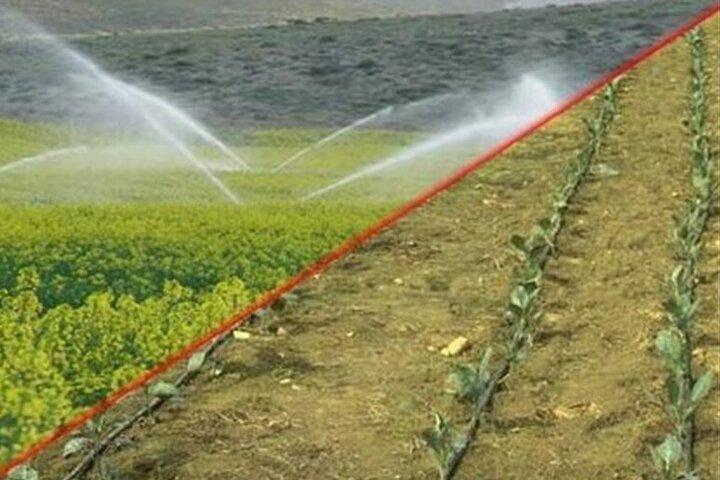 سالانه ۸۵۰ هزار تن انواع محصولات کشاورزی در ایلام تولید می شود
