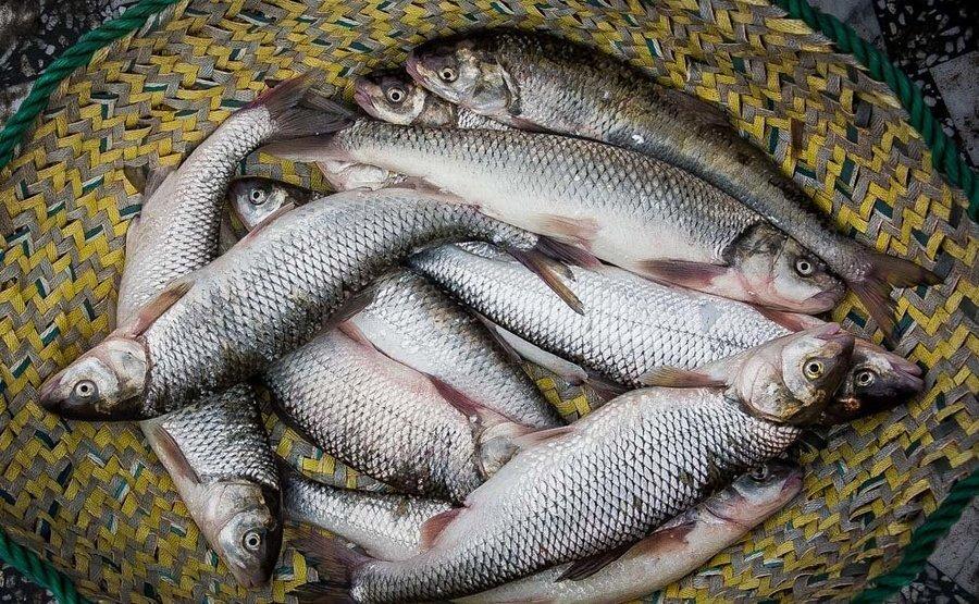 صادرات نخستین محموله ماهی قزل آلا از مازندران به روسیه