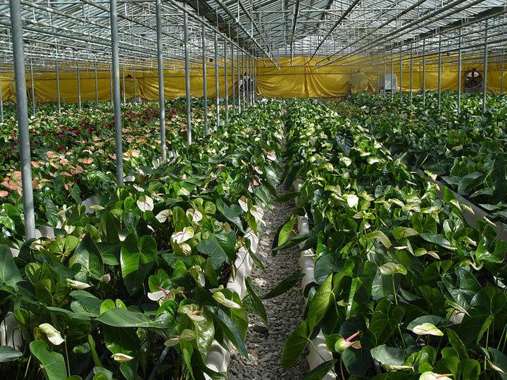 راه اندازی گلخانه هیدروپونیک در روستای کرشت با ۴۰ میلیارد ریال اعتبار/برای ۲۲ نفر اشتغالزایی ایجاد می شود