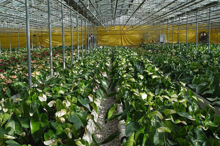 ۲ شهرک گلخانهای در استان ایلام احداث می شود