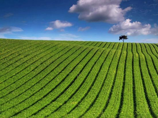 ۱۰۶میلیارد تومان تسهیلات به کشاورزان سیل زده گیلان پرداخت شد