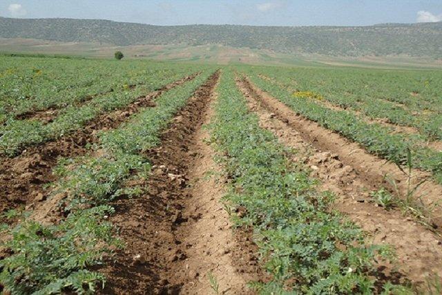 تامین آب ۵۳ هزار هکتار از اراضی کشاورزی «دشت عباس» ایلام در ابهام