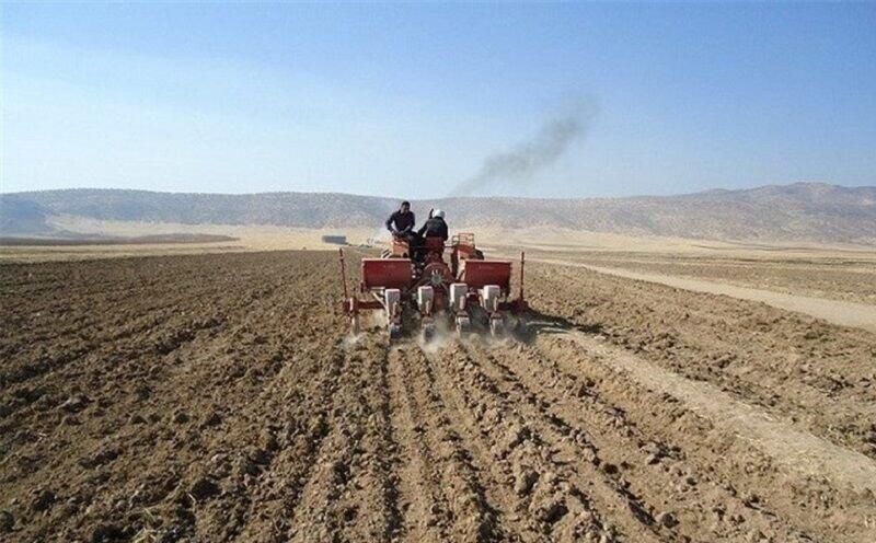 کشت پاییزه گندم در سیستان وبلوچستان به بیش از ۵۳ هزار هکتار رسید