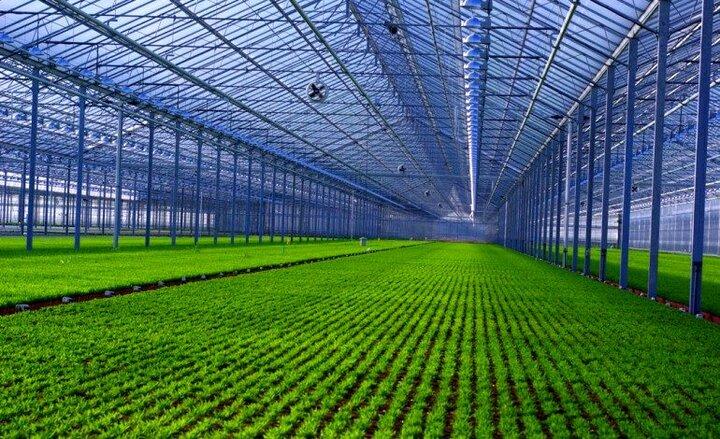 واگذاری 9 هزار هکتاری شهرک های کشاورزی تا پایان سال جاری