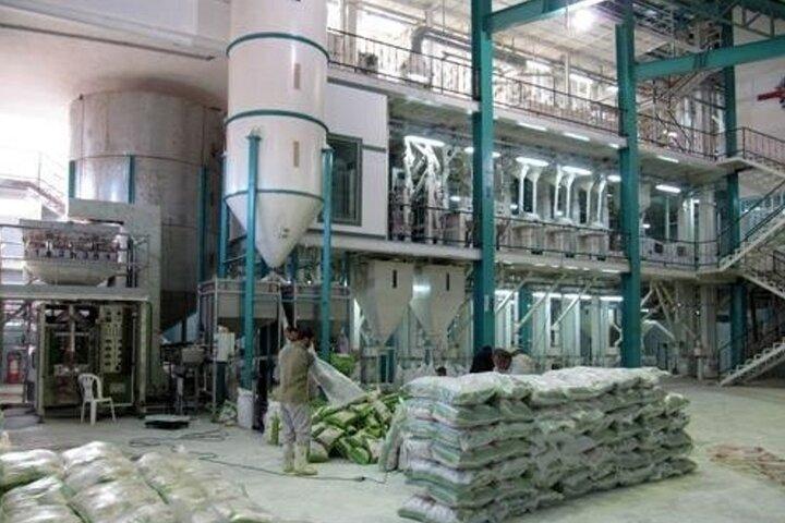 هزینه شالیکوبی ها در مازندران سرسام آور شده است