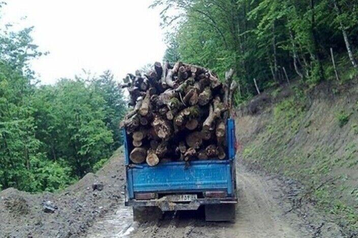قاچاق چوب تجارتی دو سر باخت در زنجان  درختانی که ایستاده میمیرند