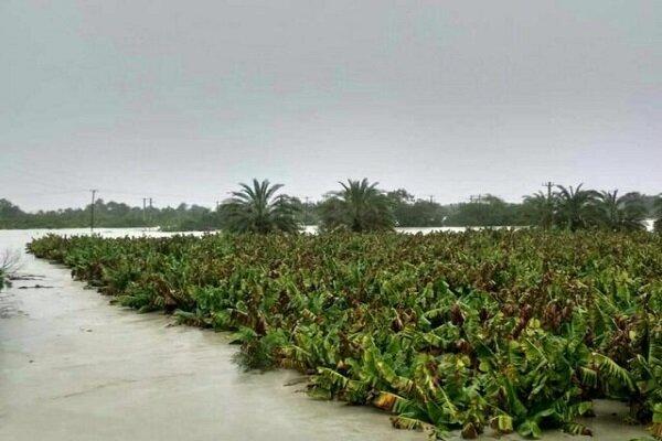 سیلاب ۹۶ میلیارد خسارت به بخش کشاورزی کرمان وارد کرد