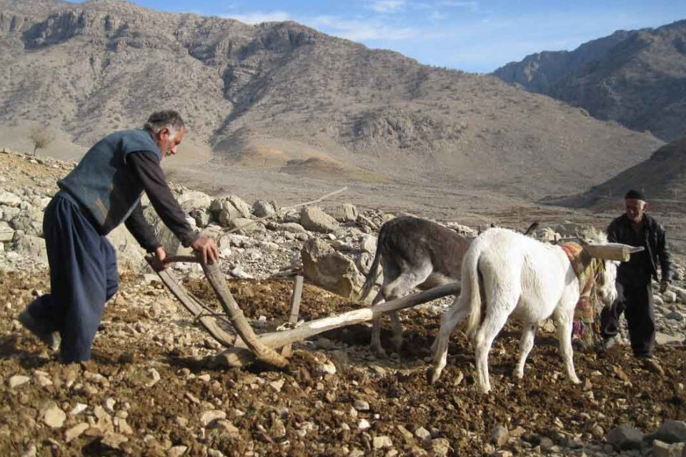 یک میلیون کشاورز روستایی کشور تحت پوشش صندوق هستند