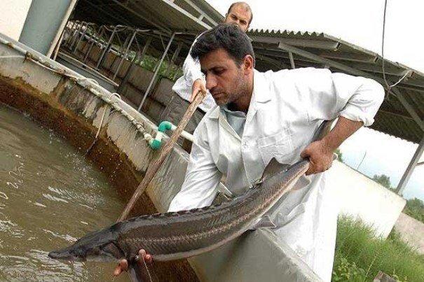 قم ظرفیت بالایی در تولید ماهیان خاویاری دارد/ جبران خسارت سیل و تگرگ