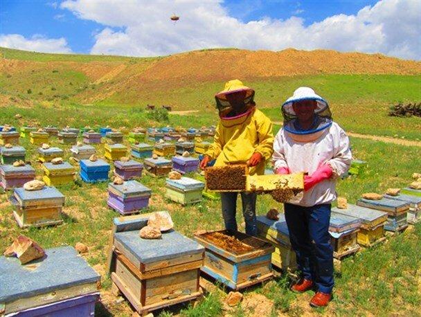 زنبورستانی که در مسیر بین المللی قدم نهاده است