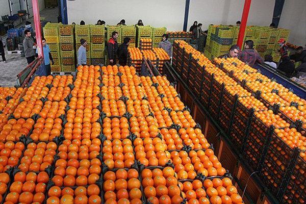 جهادکشاورزی مسئول تنظیم بازار میوه شب عید شد/ آغاز صدور کشاورز کارت