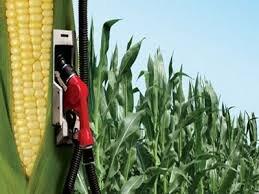 مشکل صادرات کشاورزی بی توجهی به زیرساختهای تولید است