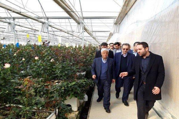 افتتاح ۳ واحد گلخانه ورامین با ۱۲۱میلیارد ریال سرمایهگذاری/ ۵۰ نفر شاغل میشوند