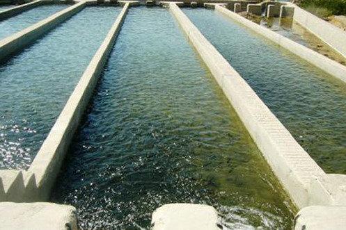 کمک های بلاعوض به مزارع پرورش ماهی خسارت دیده از سیل