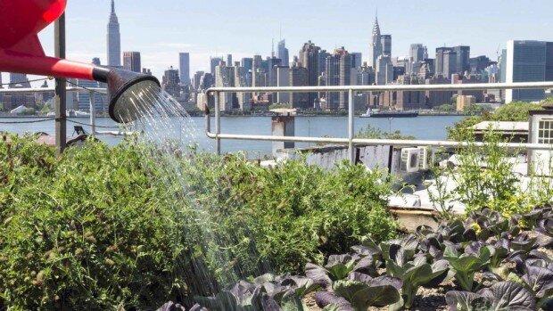 سبزیجات ارگانیک را به جای گیاهان سمی تزیینی پرورش دهیم
