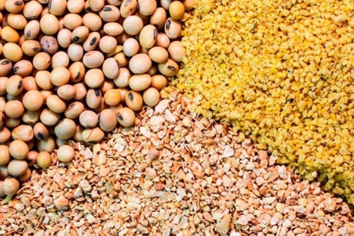 تامین و تولید ۸۰ درصد بذر غلات مورد نیاز کشاورزان استان همدان