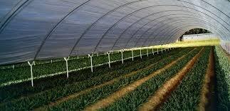 ۲۸ درصد گلخانه های ایران در استان تهران احداث شده است