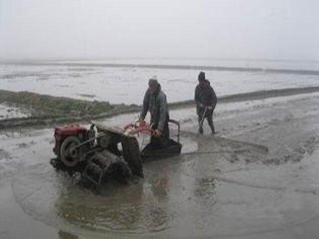 اولین مزرعه ارگانیک برنج کشور در مازندران اجرا شد