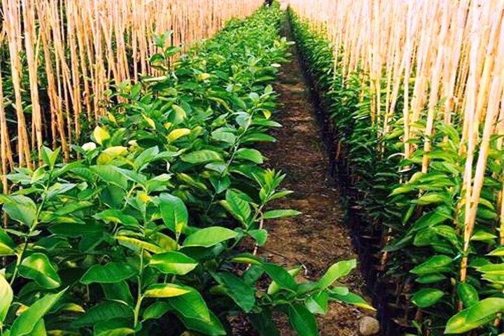 سالانه سه میلیون نهال در مراکز تحت کنترل کهگیلویه و بویراحمد تولید می شود