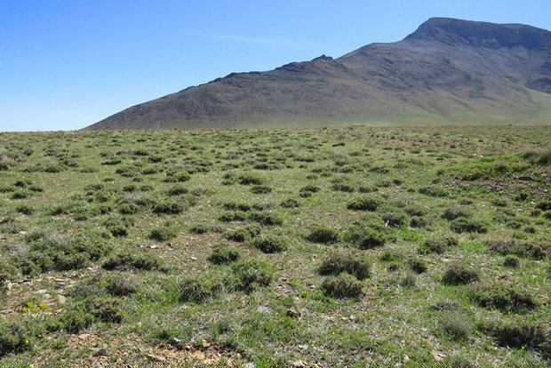 تولید علوفه در عرصههای منابع طبیعی خراسان شمالی ۴۰ درصد کاهش یافت