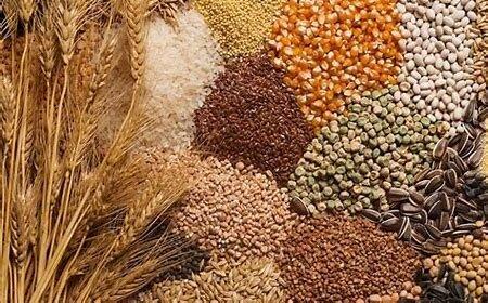 رشد ۲.۴ درصدی تولید غلات در کشور