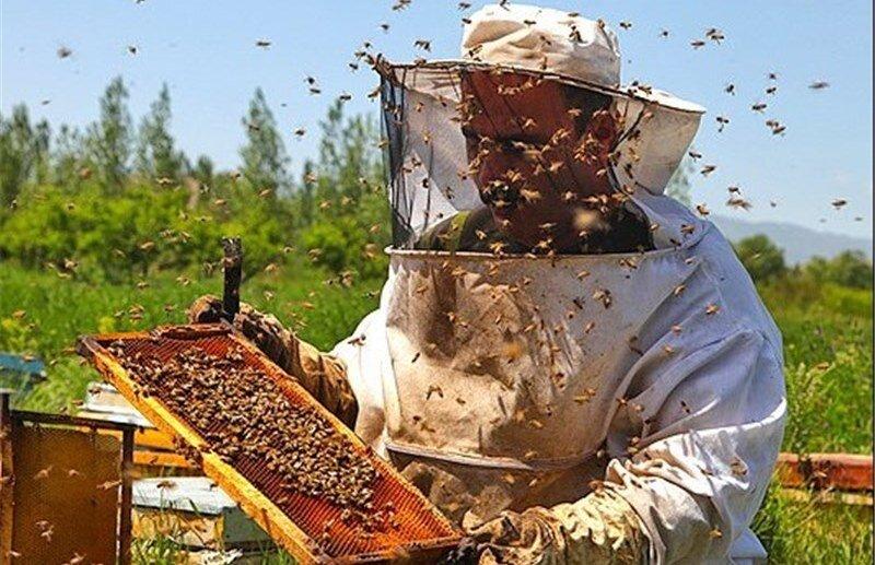 مشکلات ریز و درشت، صنعت زنبورداری را فلج کرد/ ازدیاد عسلهای تقلبی در بازار