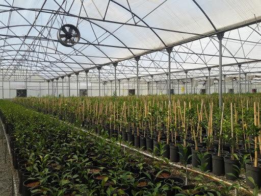 احداث باغ تولید نهال گواهی شده با ۸۰ رقم درخت در اصفهان