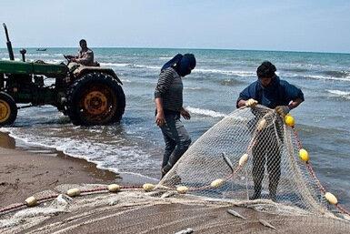۳۰۴ تن ماهی استخوانی از آب های گلستان صید شد