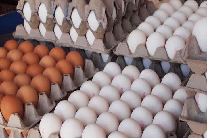 ۹۴۴ هزار کیلوگرم تخم مرغ طی سال ۹۸ از استان مرکزی به خارج از کشور صادر شده است