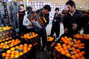 پرتقال مازندران روانه بازارهای ۲۴ استان شد