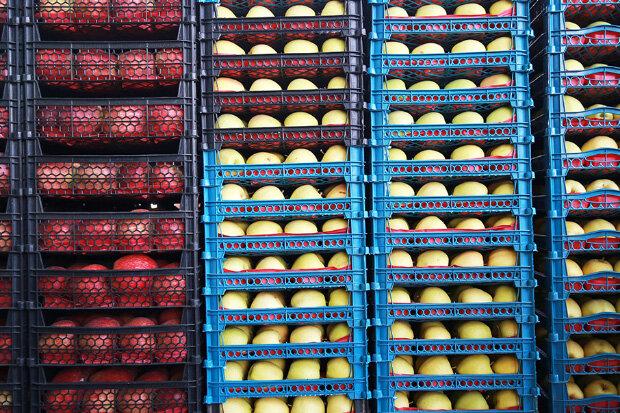 آغاز توزیع ۴۵۰ تُن میوه شب عید در ورامین