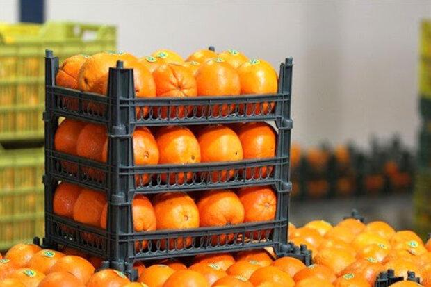 جهاد کشاورزی متولی تنظیم بازار تا عمده فروشی است