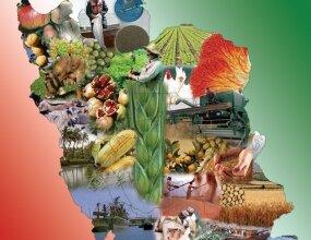 تولید ۱۱۷.۷ میلیون تن محصولات زراعی، باغبانی، دام و طیور و شیلات در سال ۹۷