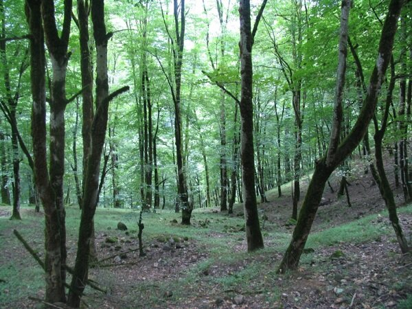 ۵۰ هکتار توسعه جنگل با بذر در زنجان انجام شد