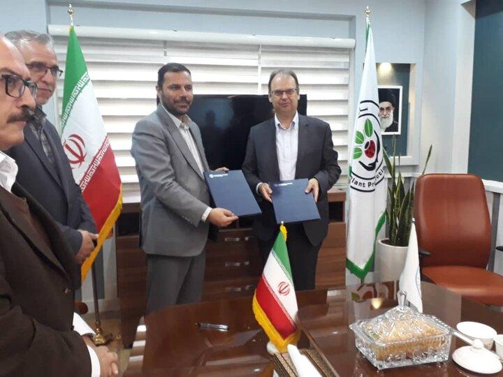 همکاری فائو با ایران برای مبارزه با آفت ملخ صحرایی
