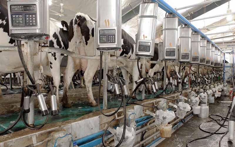 ۲۵ هزار و ۲۵۸ تن شیر از دامداران استان قزوین خریداری شد