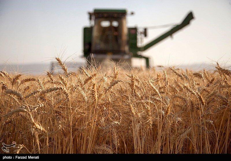 پیش بینی برداشت ۱۴ میلیون تن گندم در کشور