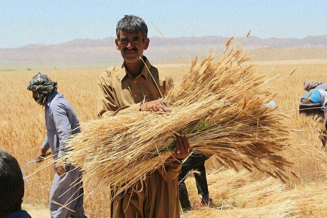 ۷۶ میلیارد تومان از مطالبات گندم کاران خراسان شمالی پرداخت شد