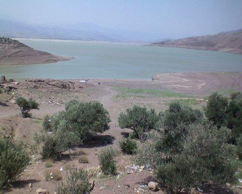 سالانه ۲۰۰ تا ۳۰۰ هکتار باغ زیتون در اراضی شیبدار قزوین ایجاد میشود