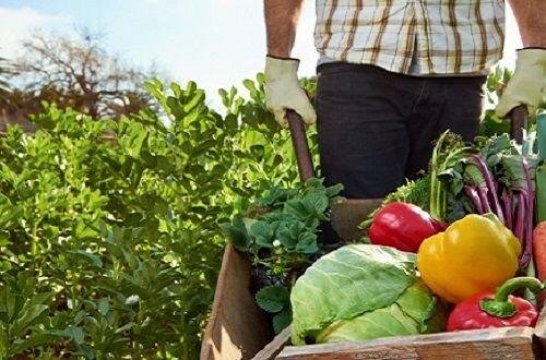 تولید محصولات سالم و ارگانیک چالش حوزه کشاورزی ایلام