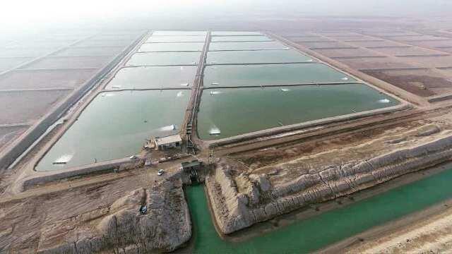 پیش بینی افزایش ۸ هزار تنی برداشت میگو در بوشهر