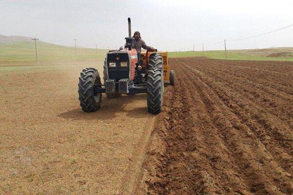 مزارع استان مرکزی منتظر بذرهای گواهیشده/ فرصت کشت بهاره از دست نرود