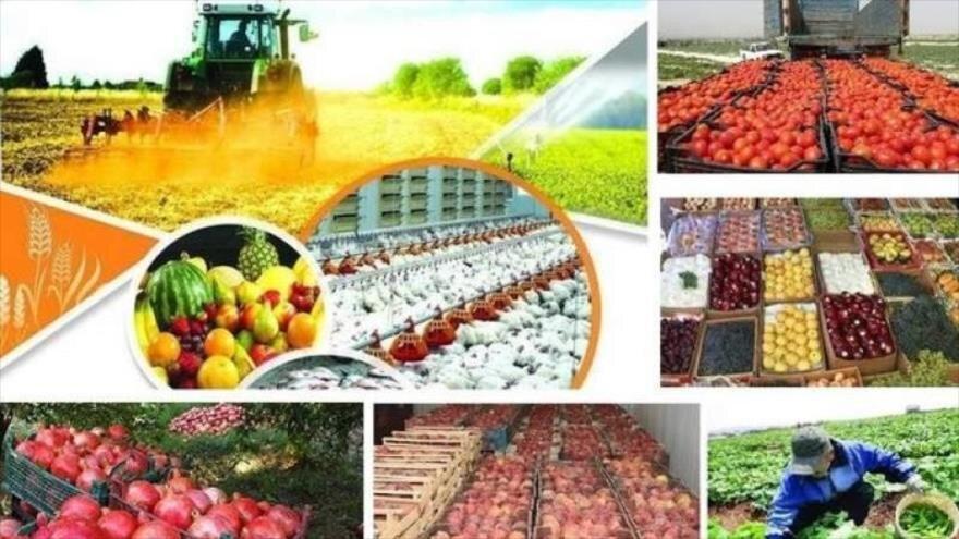 رشد صادرات محصولات کشاورزی در سال ۹۸