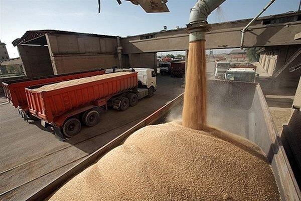 گردش مالی یک هزار میلیارد تومانی خرید گندم در استان همدان