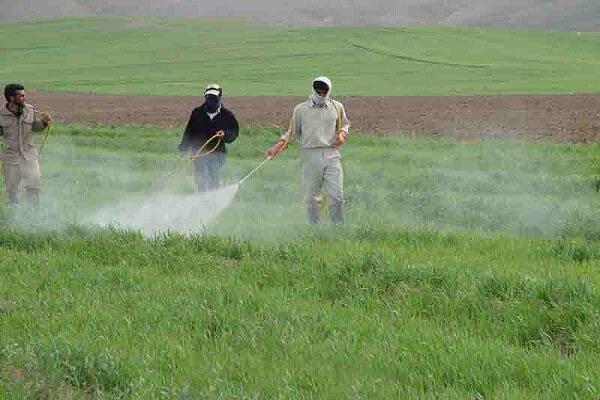 پایش اراضی و مزارع گندم برای مقابله با آفت سن مادر در بهار